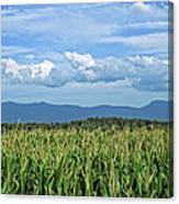Shenandoah Corn  Canvas Print