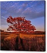 Shenandoah Tree Canvas Print