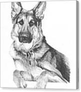 Shepherd Dog Pencil Portrait Canvas Print