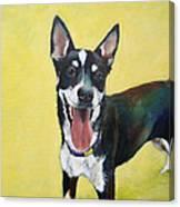 Shepherd Mix Canvas Print
