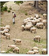Shepherd With Sheep Canvas Print