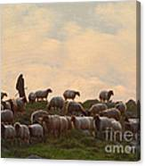 Shepherd With Sheep Standard Size Canvas Print