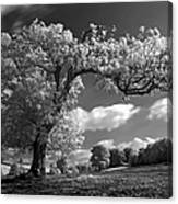 Shepton Tree Canvas Print