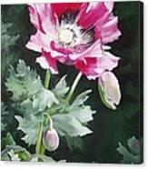 Shining Star Poppy Canvas Print