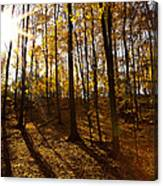 Shining Sun In The Woods Canvas Print