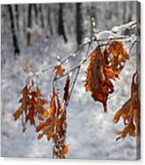 Shivering Oak Leaves Canvas Print