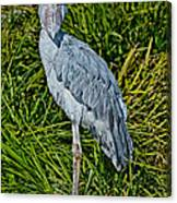 Shoebill Stork Canvas Print