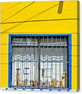 Shop Window - Mexico - Photograph By David Perry Lawrence Canvas Print