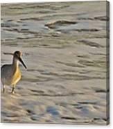 Shore Bird 7 12/5 Canvas Print