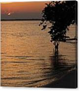 Shore Of The River Canvas Print