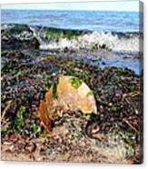 Shore Scene Canvas Print