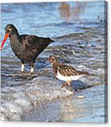 Shorebirds And Breaking Wave Canvas Print