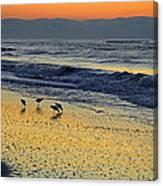 Shorebirds At Dawn Canvas Print
