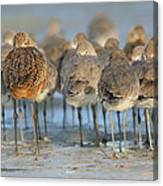 Shorebirds At Flamingo Bay Canvas Print