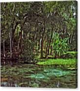 Shoreline. Rainbow Springs. Canvas Print