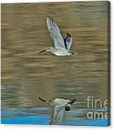 Short-billed Dowitcher And Reflection Canvas Print