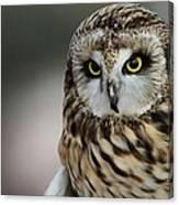 Short Eared Owl Portrait Canvas Print