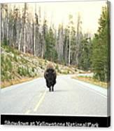 Showdown At Yellowstone Canvas Print