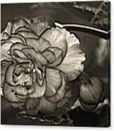 Showgirl Monochrome Canvas Print