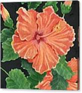 Showy Hibiscus Canvas Print