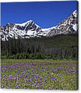 Showy Penstemon Wildflowers Sawtooth Mountains Canvas Print