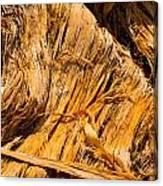 Shredded Bark Canvas Print