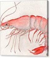 Shrimp Canvas Print