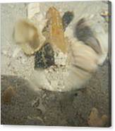 Shrimp In Motion Canvas Print