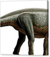 Shunosaurus, A Genus Of Sauropod Canvas Print