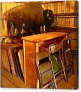 Shy Buffalo Canvas Print