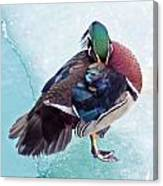 Shy Is A Wood Duck Canvas Print