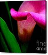 Shy Lily Canvas Print