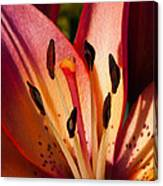 Shy Pink Lily Canvas Print