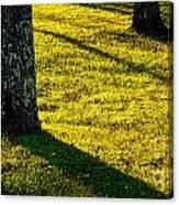 Shyness Canvas Print