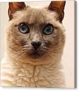 Siamese Cat Canvas Print