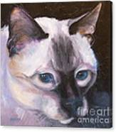 Siamese Royalty Canvas Print