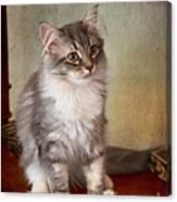 Siberian Forest Kitten II Canvas Print