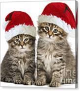 Siberian Kittens In Hats Canvas Print
