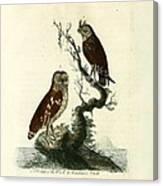 Siberian Owl And Acadian Owl Canvas Print