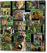Siberian Tiger Collage Canvas Print