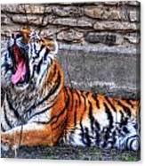 Siberian Tiger Nap Time Canvas Print