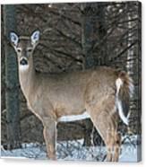 Side Of The Road Deer Canvas Print