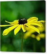 Side View Of A Yellow Flower Canvas Print
