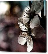 Side View Of White Flowers Canvas Print