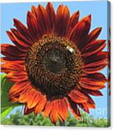 Sienna Sunflower Canvas Print