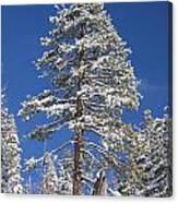 Sierra Snow Canvas Print