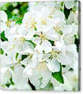 Signs That Spring Has Sprung Canvas Print
