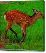 Sika Fawn 2 Canvas Print