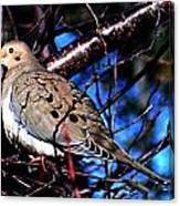 Silent Dove Sm  Canvas Print