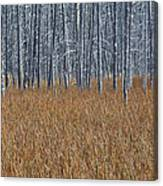 Silent Sentinels Of Autumn Grasses Canvas Print